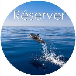 Journée Nage avec les dauphins