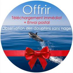Bon cadeau Observation des dauphins