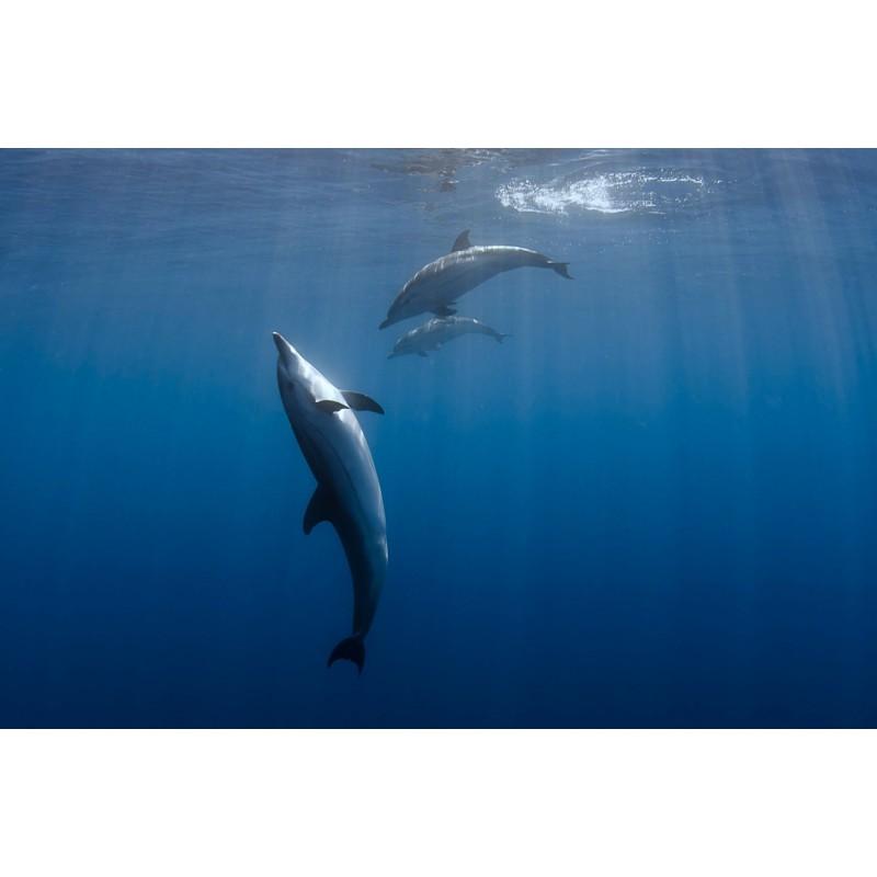 Etre avec les dauphins libres !