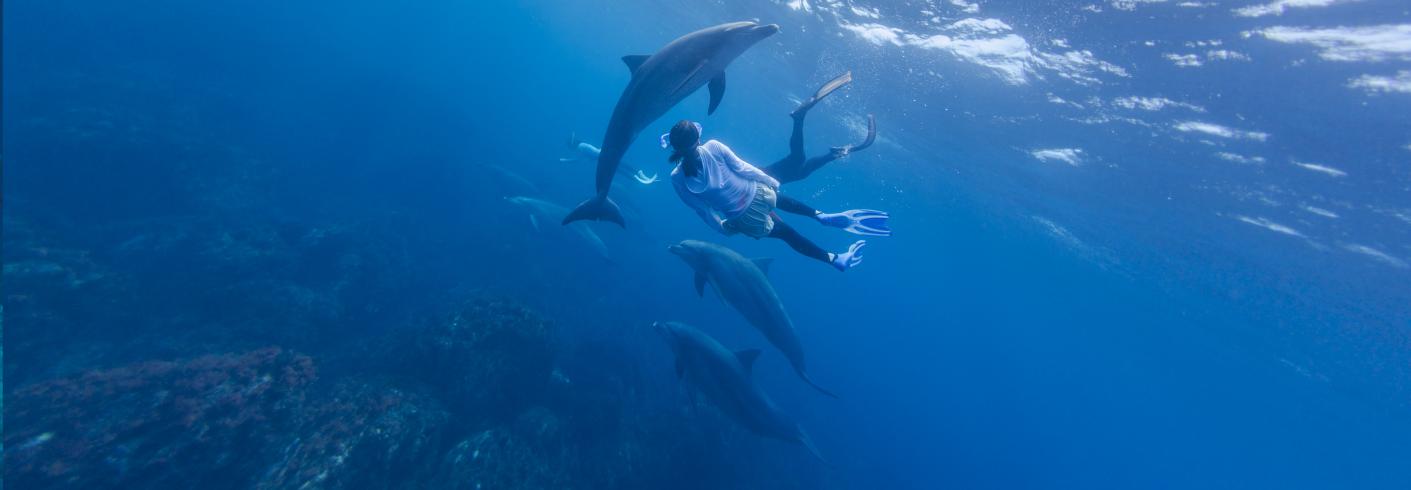 nager avec les dauphins France